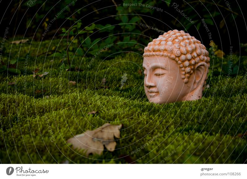 Buddha Leaf Green Calm Meditation Consciousness Watchfulness Human being Statue Concentrate Power Force Energy industry Head dosh folio silence attention