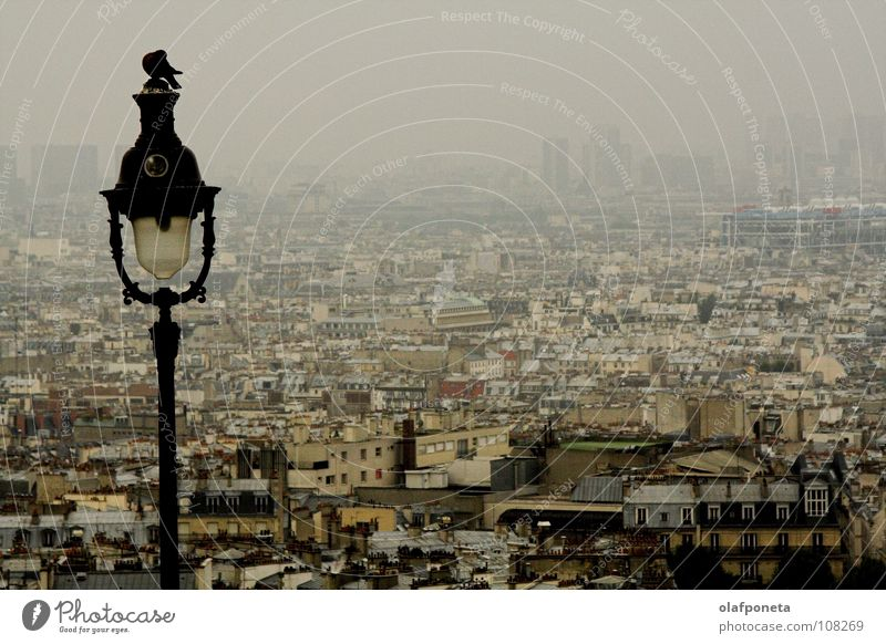 Paris in the morning Fog Morning Dark Grief Gray Town Large Bird Lamp Lantern Pigeon France Far-off places Calm Sadness melancholic Looking latter dawn