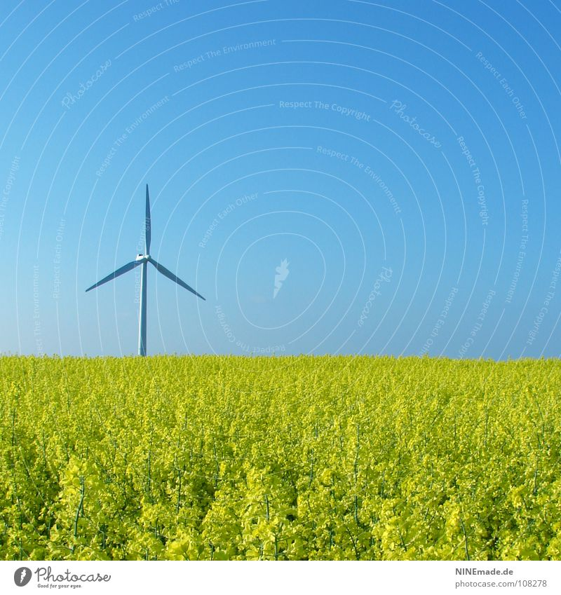 Nature Sky White Flower Green Summer Yellow Blossom Movement Spring Field Wind Environment Energy industry Modern Electricity