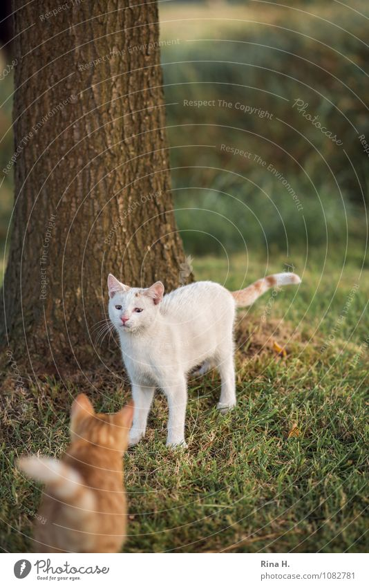 convergence Plant Meadow Pet Cat 2 Animal Authentic Cute Approach Skeptical Mistrust Fear Colour photo Exterior shot Deserted Shallow depth of field
