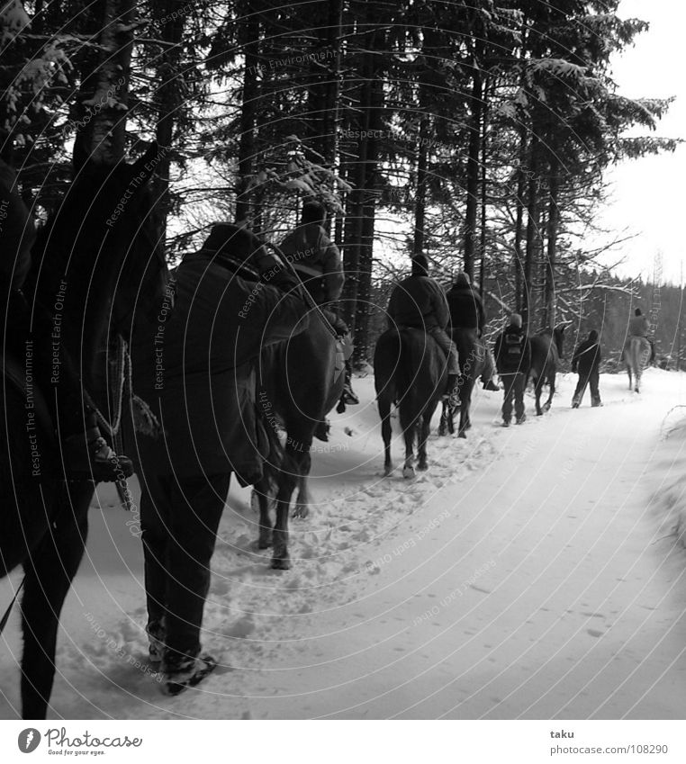 Human being Tree Sun Winter Calm Forest Landscape Cold Snow Work and employment Glittering Multiple Break Horse Tracks Footprint