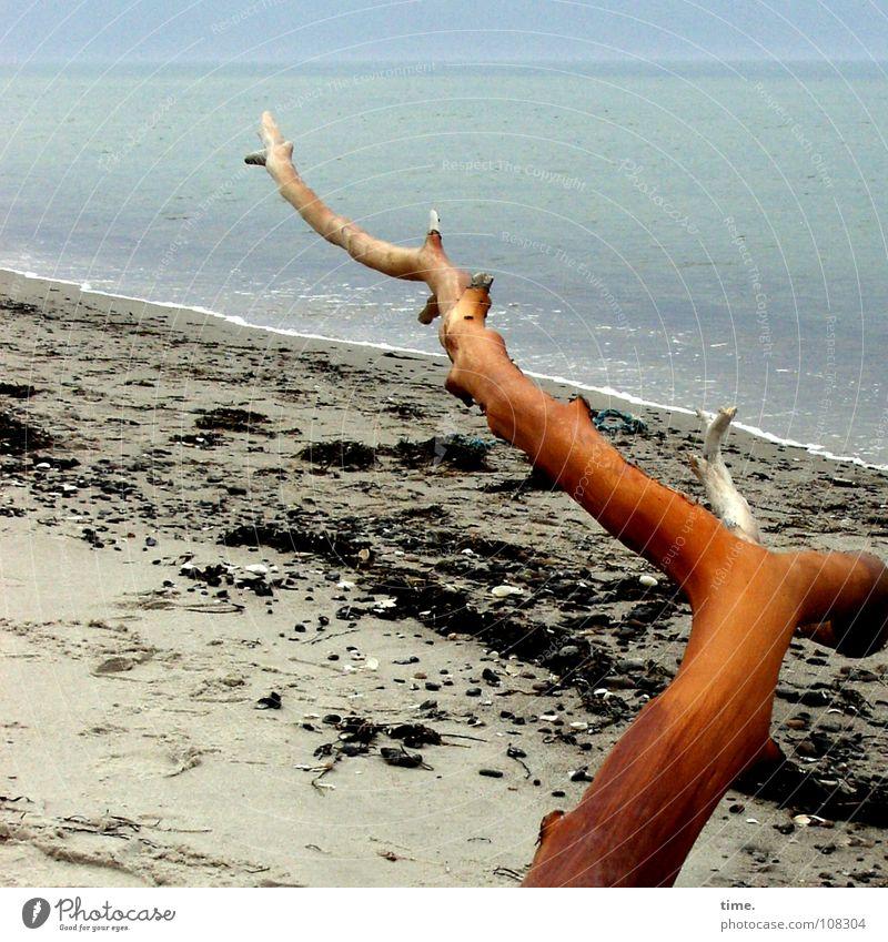Water Ocean Blue Beach Sand Coast Horizon Branch Turquoise Baltic Sea Pine Flotsam and jetsam