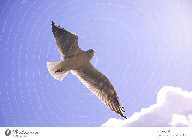 seagull Animal Bird Clouds Sky flying seagull Sun Aviation
