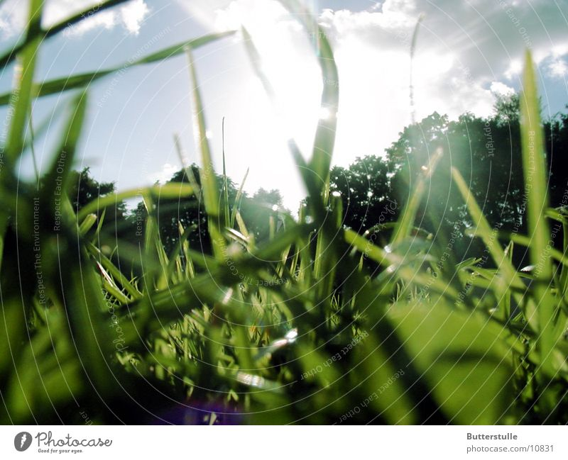 ...in the grass Grass Sunlight Lawn Nature Relaxation