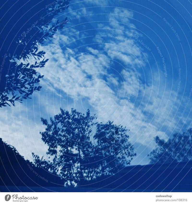 Water Sky Tree Blue Clouds Cobalt blue