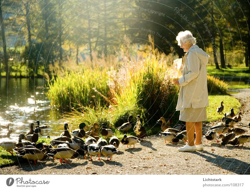 Human being Woman Joy Calm Relaxation Life Senior citizen Movement Happy Sadness Contentment Group of animals Transience 60 years and older