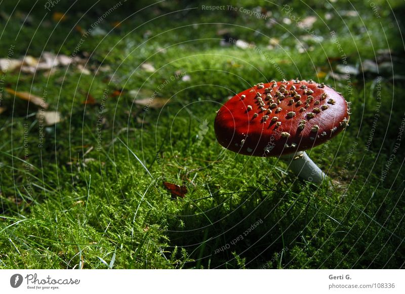 Green Beautiful Leaf Dark Warmth Autumn Happy Growth Dangerous Stand Floor covering Symbols and metaphors Physics Hat Well-being Intoxicant
