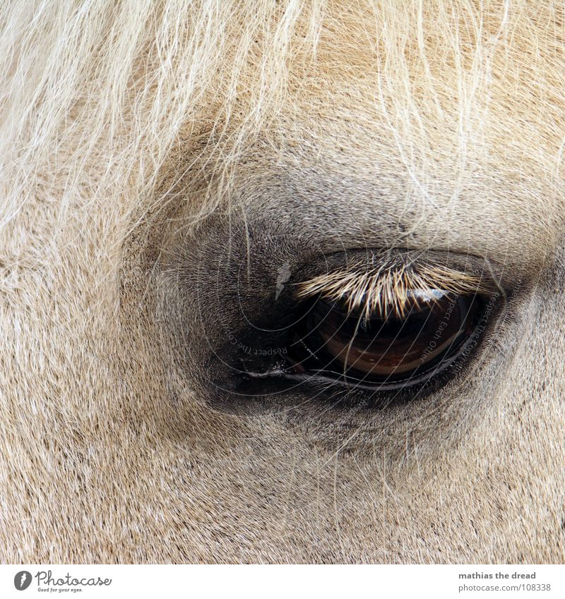 Faithful Horse View I Eyelash Loyalty Dark Large Grief Mammal Pelt Distress Looking blink Near Sadness ungulate land animal Hair and hairstyles Bright