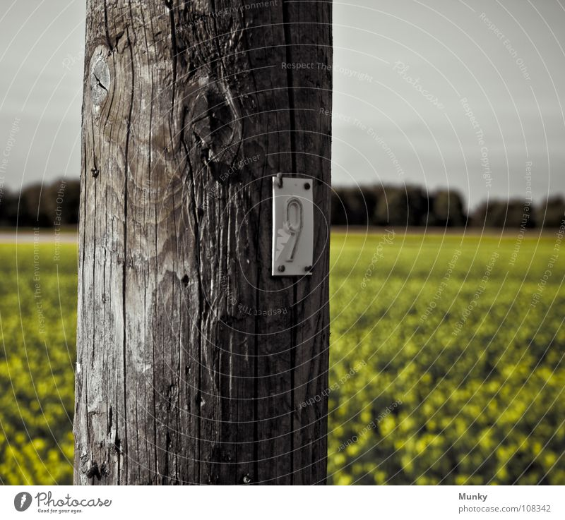 Sky Green Tree Landscape Yellow Wood Gray Electricity Round Digits and numbers Column Crack & Rip & Tear Electricity pylon Tradition Road marking Pole