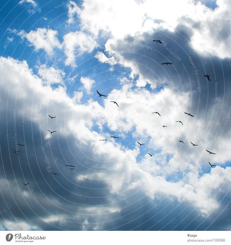 Sky White Blue Black Clouds Bird Flying Scream Seagull Circle Judder