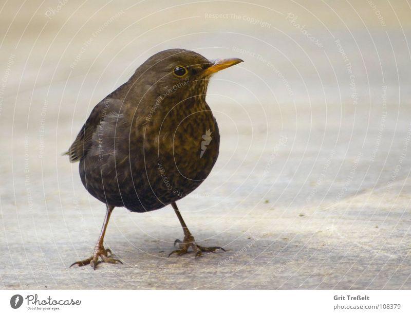 Summer Legs Bird Feather Beak Animal Blackbird