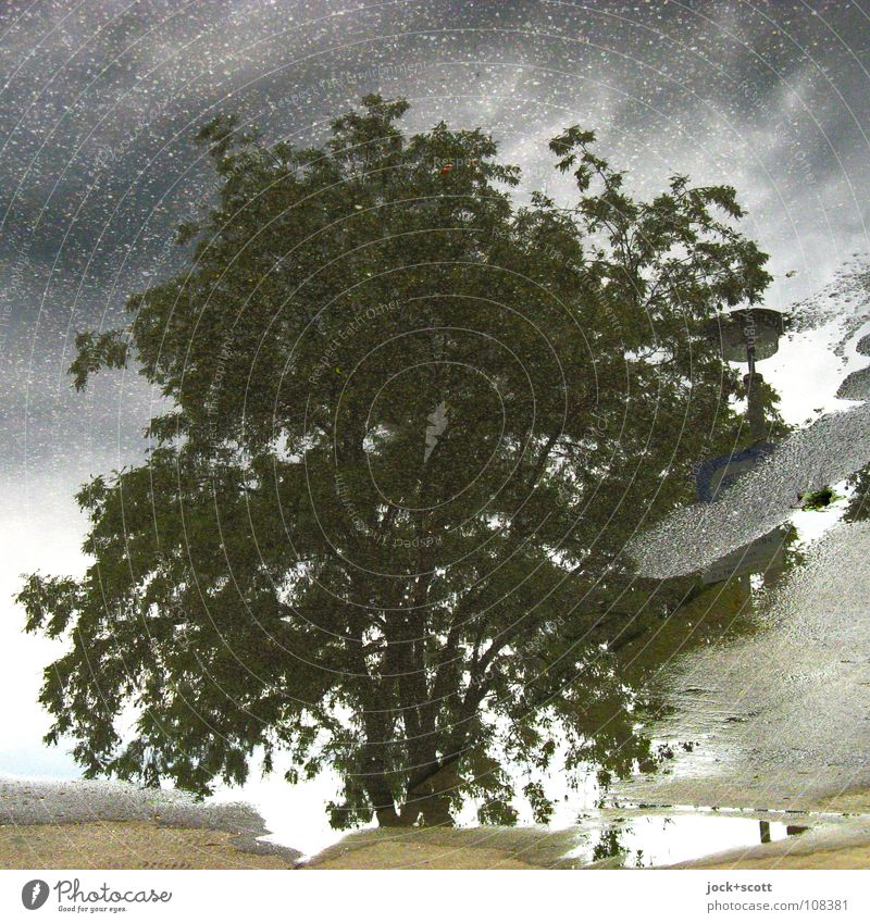 Deciduous tree in the puddle Storm clouds Climate change Bad weather Marzahn Puddle Simple naturally Under Gray Inspiration Surrealism Tar Background picture