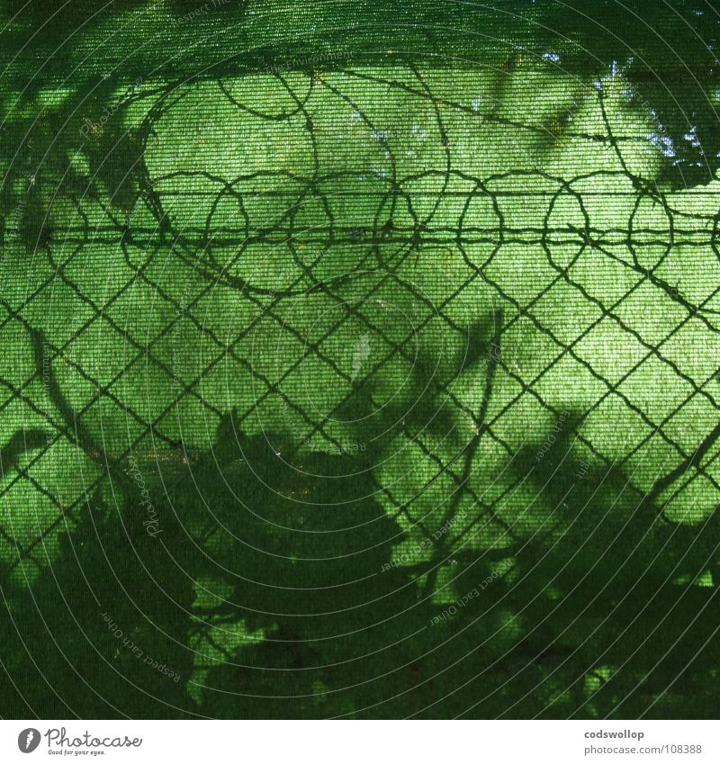 Green Garden Park Safety New Zealand Barbed wire Wire netting fence Mount Eden