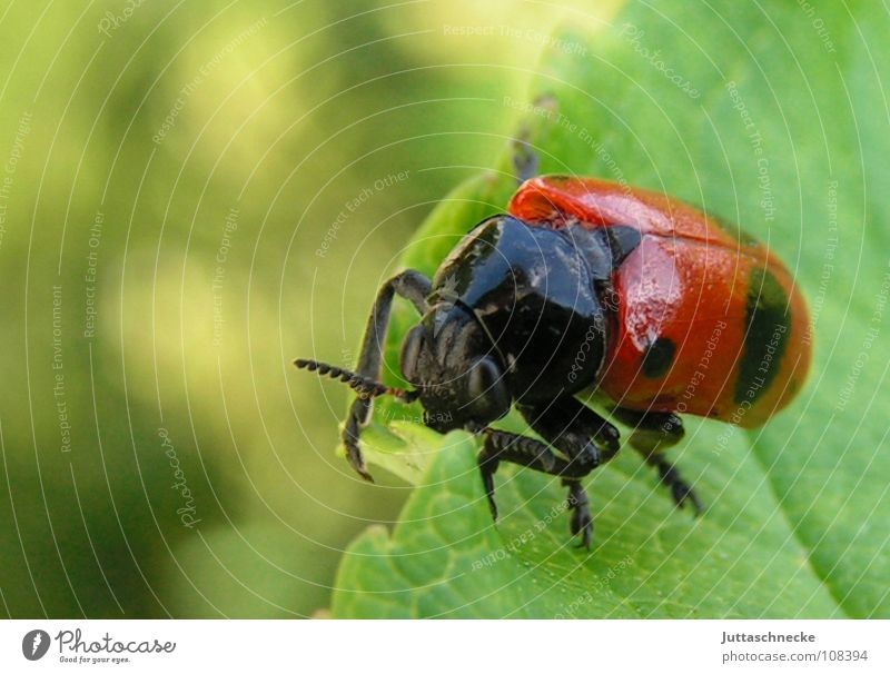 Nature Green Red Summer Leaf Animal Garden Happy Glittering Flying Success Sweet Wing Insect Disaster