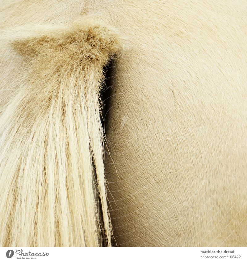 from behind Horse Animal Mammal Nostrils Opening Bristles Glittering Hairline Soft Zoo Petting zoo Hind quarters Tails Hair and hairstyles Smoothness