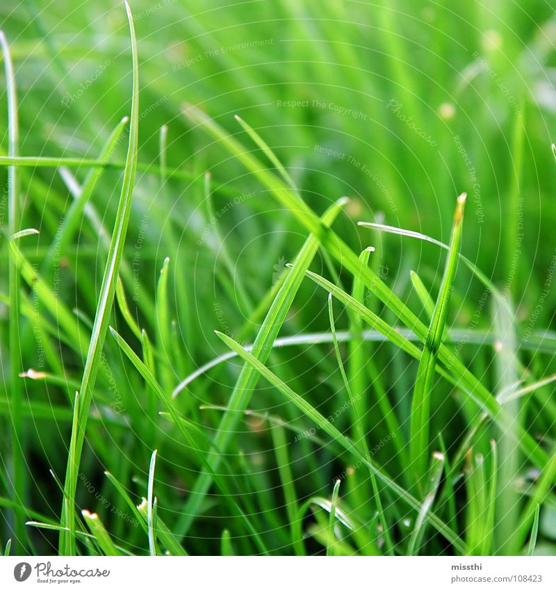 Nature Green Meadow Grass Garden Park Fresh Lawn Near Square Blade of grass Gaudy Green space