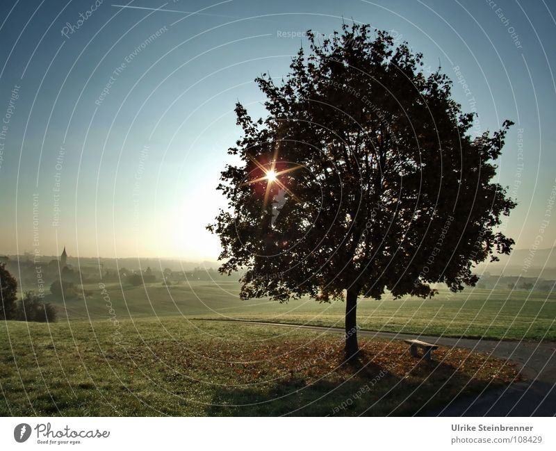 Star-shaped sun shines through a tree over a misty landscape Energy industry Environment Nature Landscape Plant Autumn Fog Meadow Field hillock Village