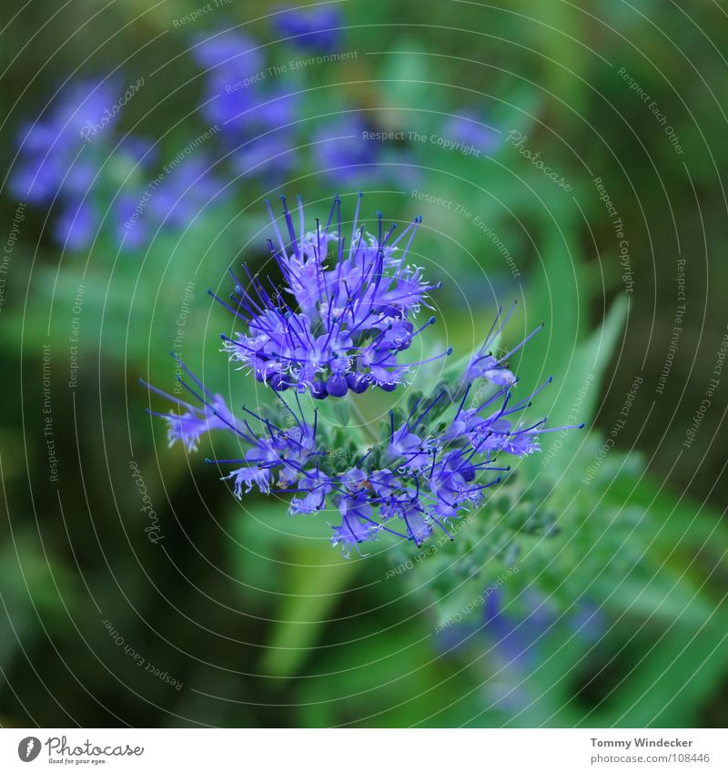 Planète bleue Plant Leaf green Summer Spring Green Bilious green Violet Foliage plant Growth Seasons Soft Wet Fresh Botany Depth of field Flower Grass Blossom