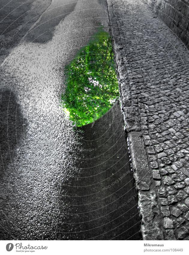 Water Tree Green Leaf Street Stone Lanes & trails Rain Wet Drops of water Bridge Drop Tunnel Sidewalk Traffic infrastructure Damp