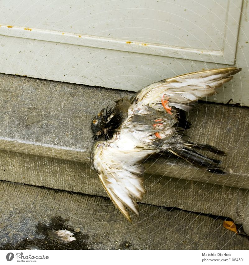 ADDUCTOR DISTORTION Pigeon Bird Animal White Funeral Accident Crash Crashed Refuse disposal Household garbage Doormat City life Knockout Earnest Aviation Grief