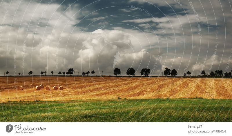 Sky Tree Clouds Street Autumn Landscape Field Weather Grain Agriculture Americas Harvest Avenue Country road Hay bale