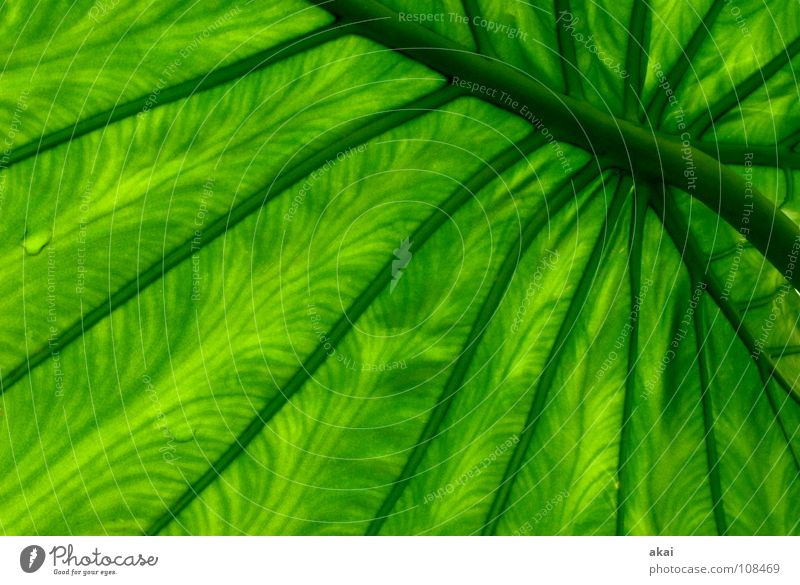 Sheet 21 Plant Virgin forest South America Wilderness Green Botany Part of the plant Creeper Verdant Environment Bushes Warped Greenhouse Beautiful akai jörg