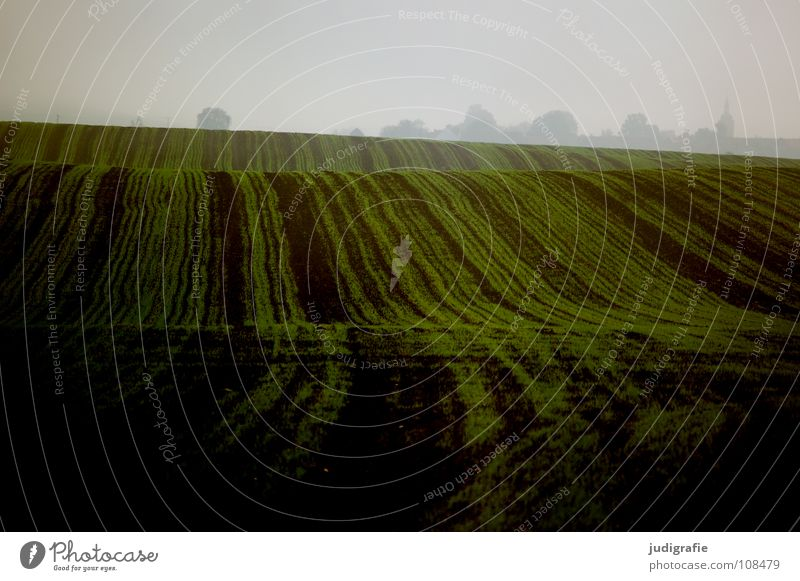 Green Colour Autumn Line Brown Field Waves Fog Earth Floor covering Hill Agriculture Harvest Sowing