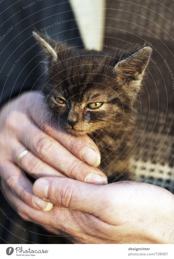 Cat Hand Love Small Style Dangerous Safety Threat Cute Protection Mammal Safety (feeling of) Smart Affection Clever Astute