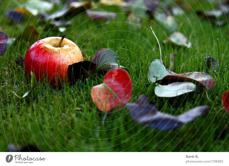 Nature Green Red Leaf Nutrition Yellow Autumn Meadow Garden Brown Healthy Food Wet Fruit Fresh Lawn