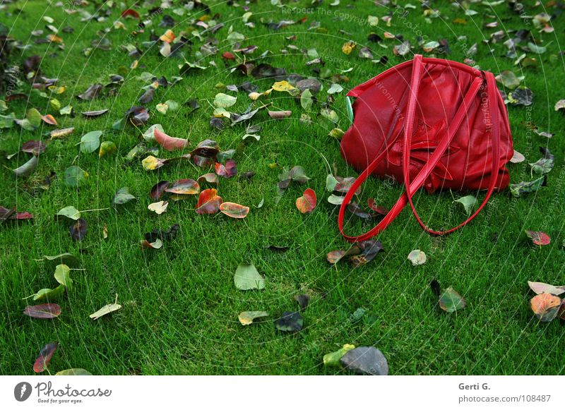 Nature Green Red Leaf Yellow Autumn Meadow Garden Brown Wet Fresh Lawn Transience Bag Chic Juicy