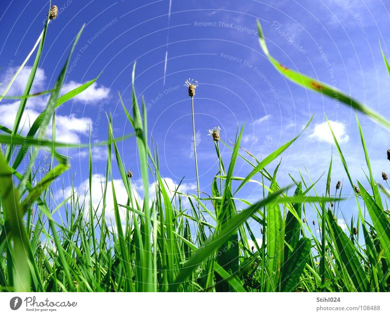 Sky Blue Green Summer Flower Joy Clouds Meadow Grass Spring Blossom Energy industry Growth Hope Stalk Brave