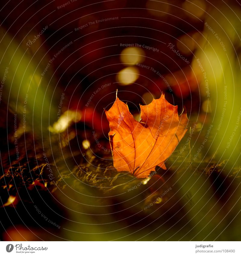 Nature Beautiful Sun Leaf Colour Lamp Autumn Grass Warmth Orange Field Environment Physics Sunday Cardiovascular system