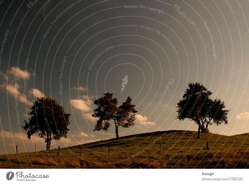 Nature Sky Tree Calm Clouds Loneliness Life Dark Relaxation Autumn Dream Landscape Orange Horizon 3 Romance