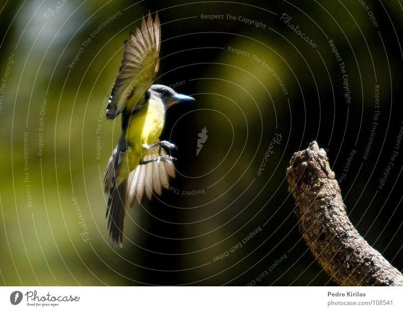 Bird Zoo Brazil Belo Horizonte