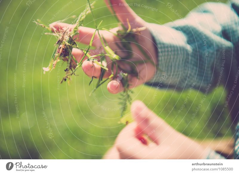 Human being Child Nature Green Environment Grass Boy (child) Playing Happy Freedom Garden Masculine Leisure and hobbies Fresh Authentic Infancy
