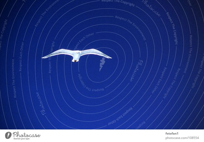 Blue Far-off places Bird Flying Aviation Seagull Blue sky
