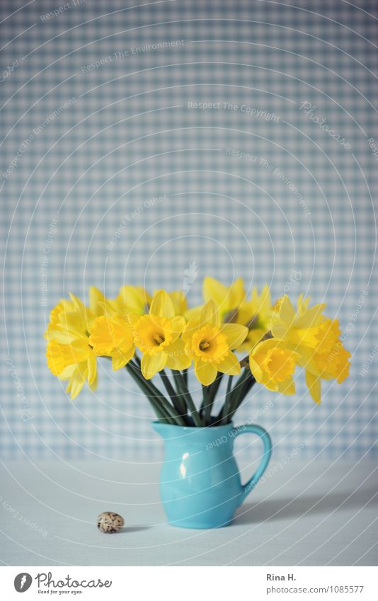 Easter Spring Flower Blue Yellow Joie de vivre (Vitality) Spring fever Still Life Narcissus Egg Vase Checkered Bouquet Jug Colour photo Interior shot Deserted