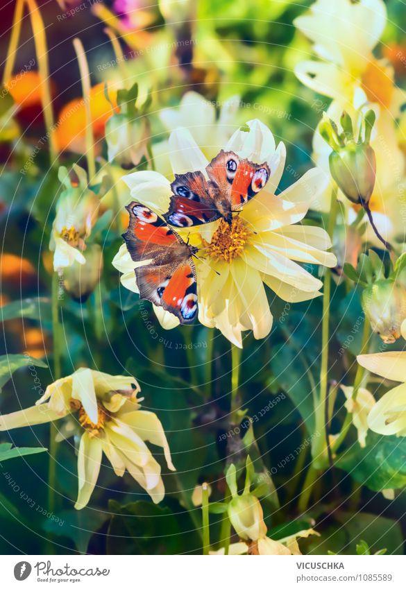 Butterflies on flower in the garden Elegant Design Summer Garden Nature Plant Sunlight Spring Autumn Beautiful weather Flower Park Meadow Butterfly 2 Animal