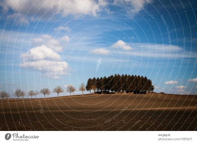 Tuscan idyll Vacation & Travel Tourism Trip Agriculture Forestry Environment Nature Landscape Plant Earth Sky Clouds Horizon Spring Climate Beautiful weather