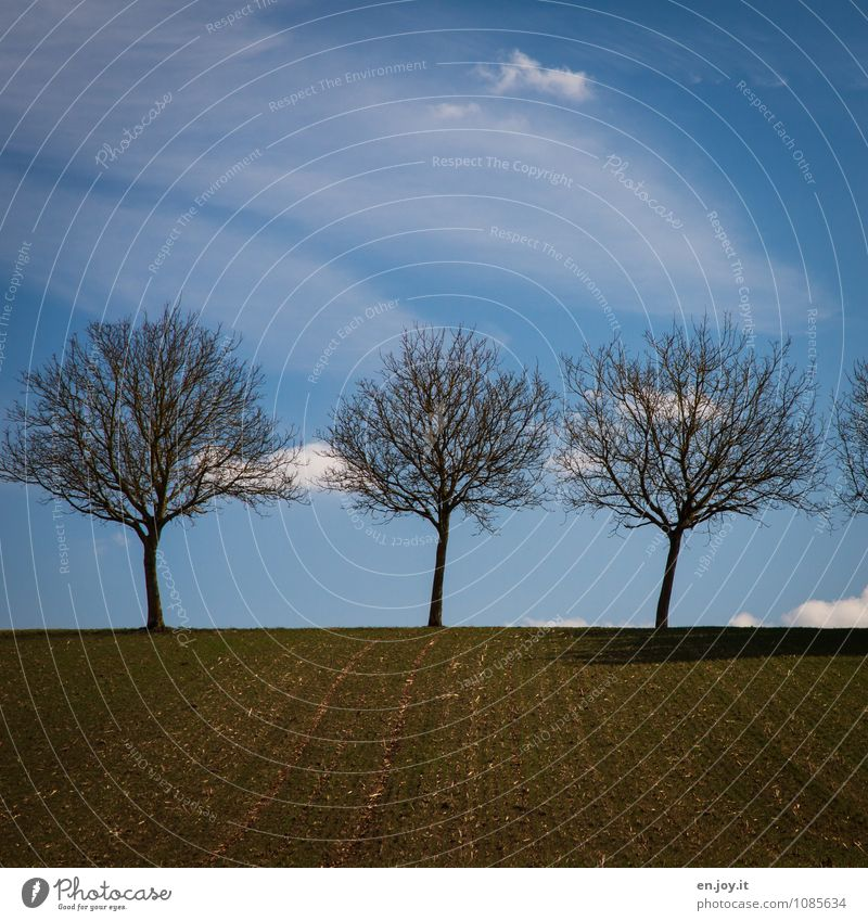 3 Agriculture Forestry Environment Nature Landscape Plant Earth Sky Clouds Horizon Spring Climate Beautiful weather Tree Field Growth Blue Brown Spring fever