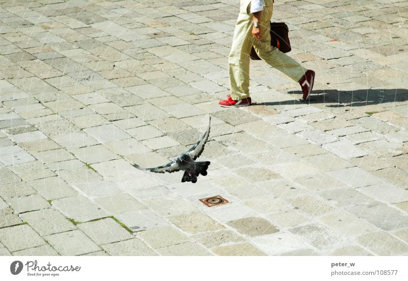 Human being Nature City Red Summer Animal Street Movement Footwear Bird Going Flying Wing Italy Traffic infrastructure Cobblestones