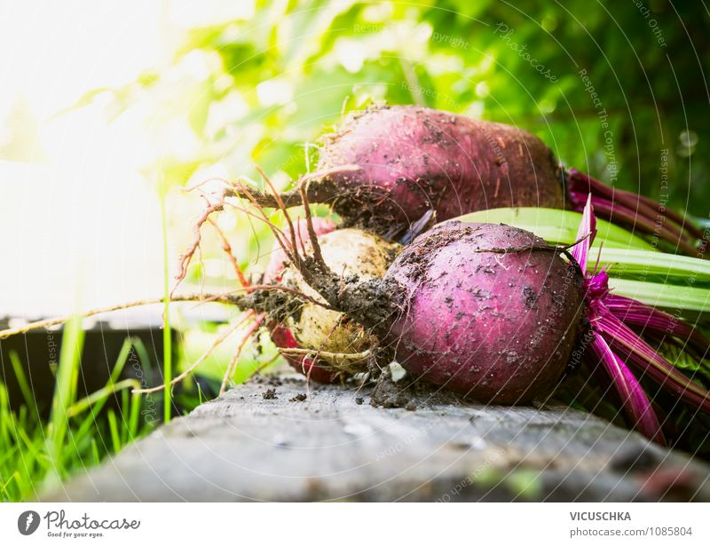 Beetroot bundles in the garden Food Vegetable Organic produce Vegetarian diet Diet Healthy Eating Life Summer Garden Nature Garden Bed (Horticulture)