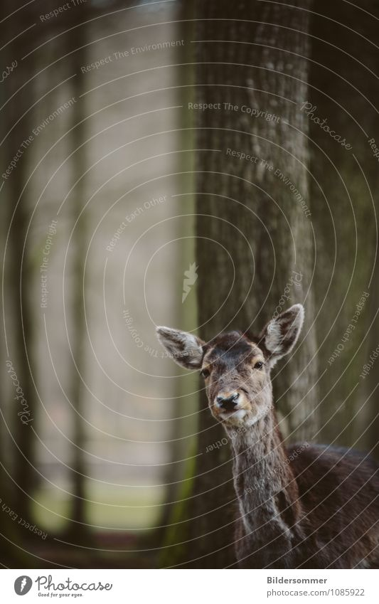 wonders who was more curious here :) Tree Forest Animal Wild animal Zoo Roe deer Forest animal Red deer 1 Observe Discover Looking Stand Friendliness Curiosity