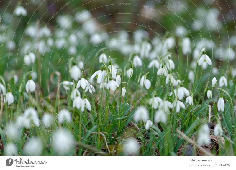 Nature Plant Beautiful Green White Flower Meadow Spring Blossom Small Garden Growth Fresh Stand Happiness Cute