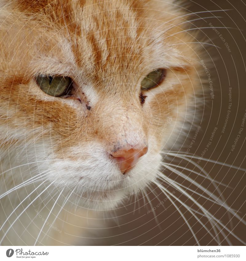 I see something you can't see... Animal Pet Cat Animal face Pelt Observe Looking Wait Beautiful Natural Red-haired Watchfulness Curiosity Cute Soft Dirty Odor