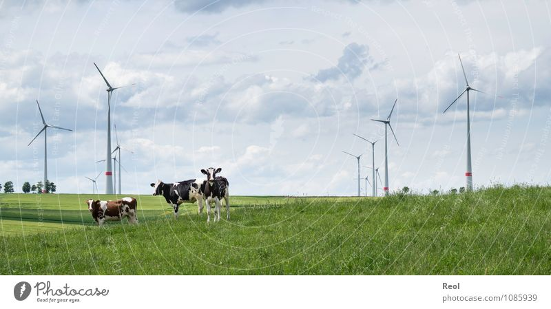 in the field Nature Landscape Air Sky Clouds Beautiful weather Grass Foliage plant Meadow Field Pasture Pinwheel Wind energy plant Rotor Animal Farm animal Cow
