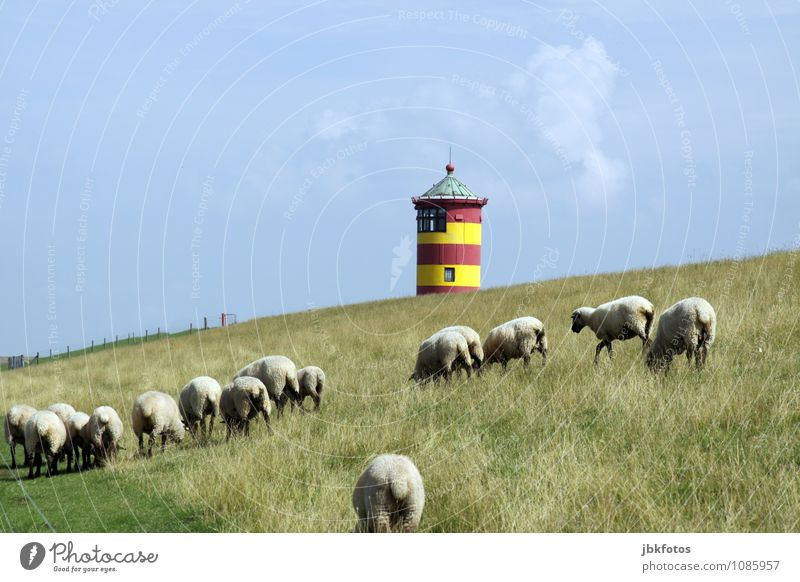 Sky Nature Summer Landscape Animal Environment Coast Group of animals Beautiful weather Tower Hill Pasture North Sea Environmental protection Sheep Lighthouse
