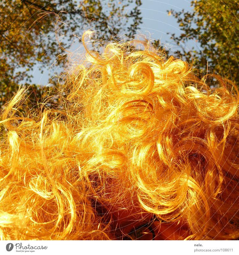 hair always go Autumn Eyeglasses Tree Worm's-eye view Blonde Glimmer Joy Sun nele. slur one's teeth Looking Hair and hairstyles Lamp Sky Curl Nature no split