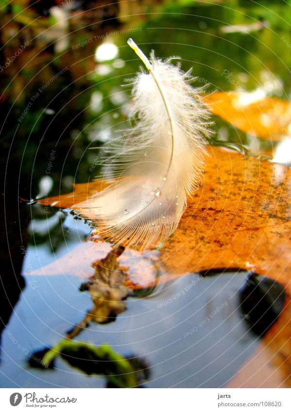nib Lake Leaf Autumn Fine White Bird Drops of water Multicoloured Calm Easy Feather Park Water jarts