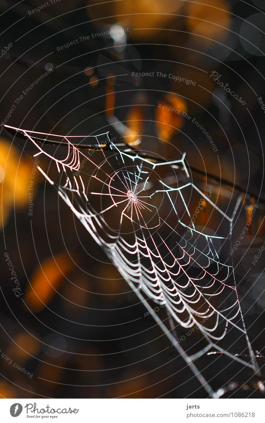 permanently elastic and beautiful Plant Animal Tree Leaf Forest Spider Firm Nature Net Spider's web Colour photo Exterior shot Close-up Deserted Copy Space top